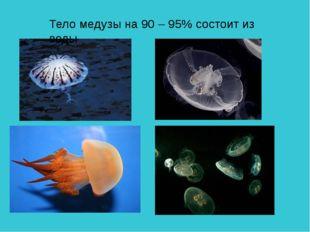 Тело медузы на 90 – 95% состоит из воды