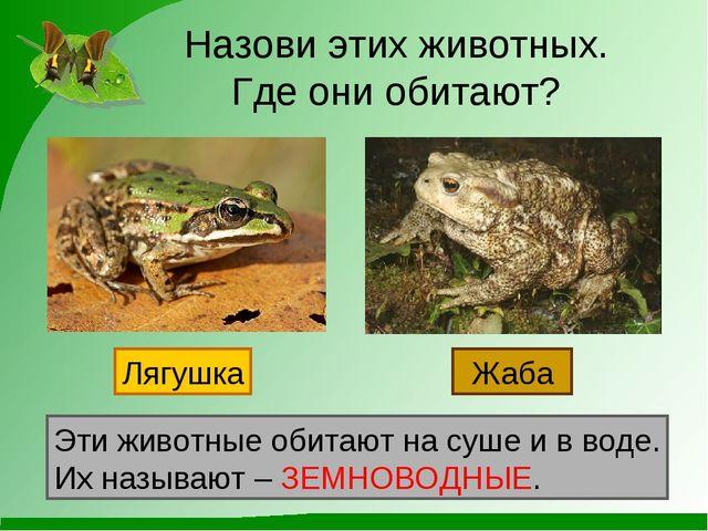Назови этих животных. Где они обитают? Лягушка Жаба Эти животные обитают на с...
