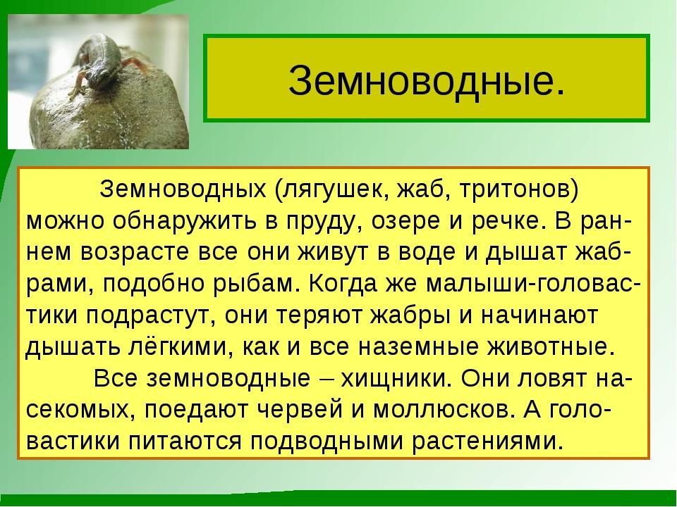 Земноводные. Земноводных (лягушек, жаб, тритонов) можно обнаружить в пруду, о...