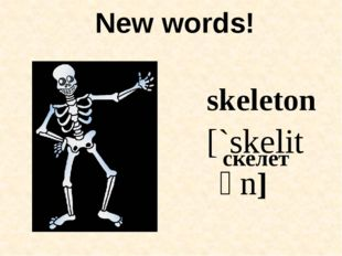 New words! skeleton [`skelitən] скелет
