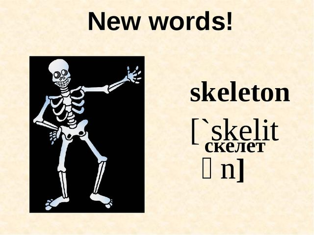 New words! skeleton [`skelitən] скелет
