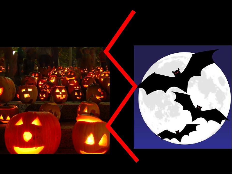 pumpkins bats