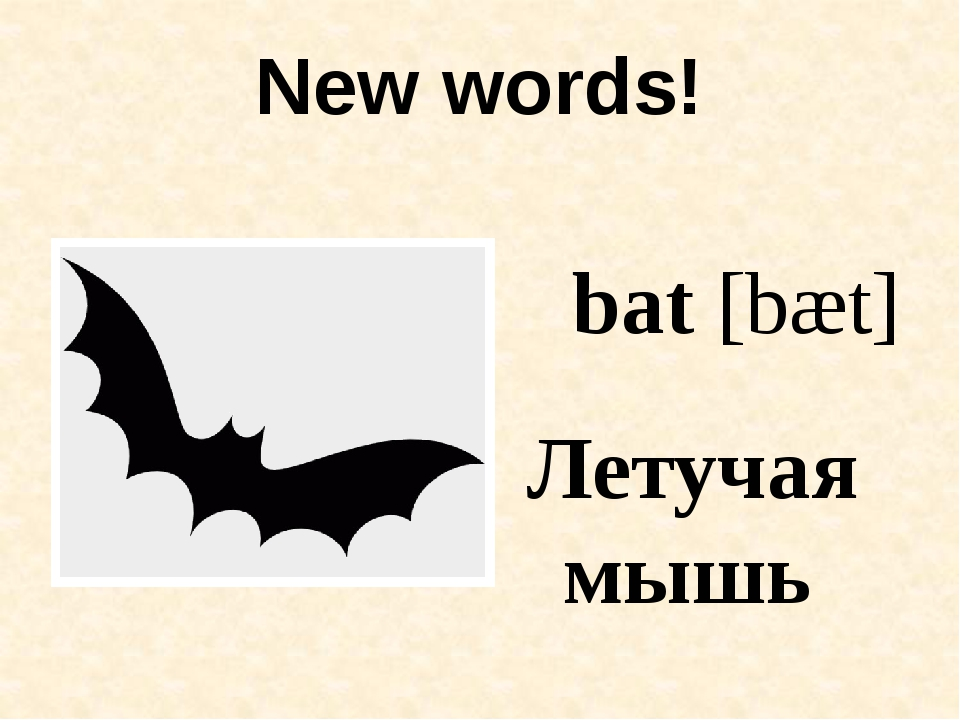 New words! bat [bæt] Летучая мышь