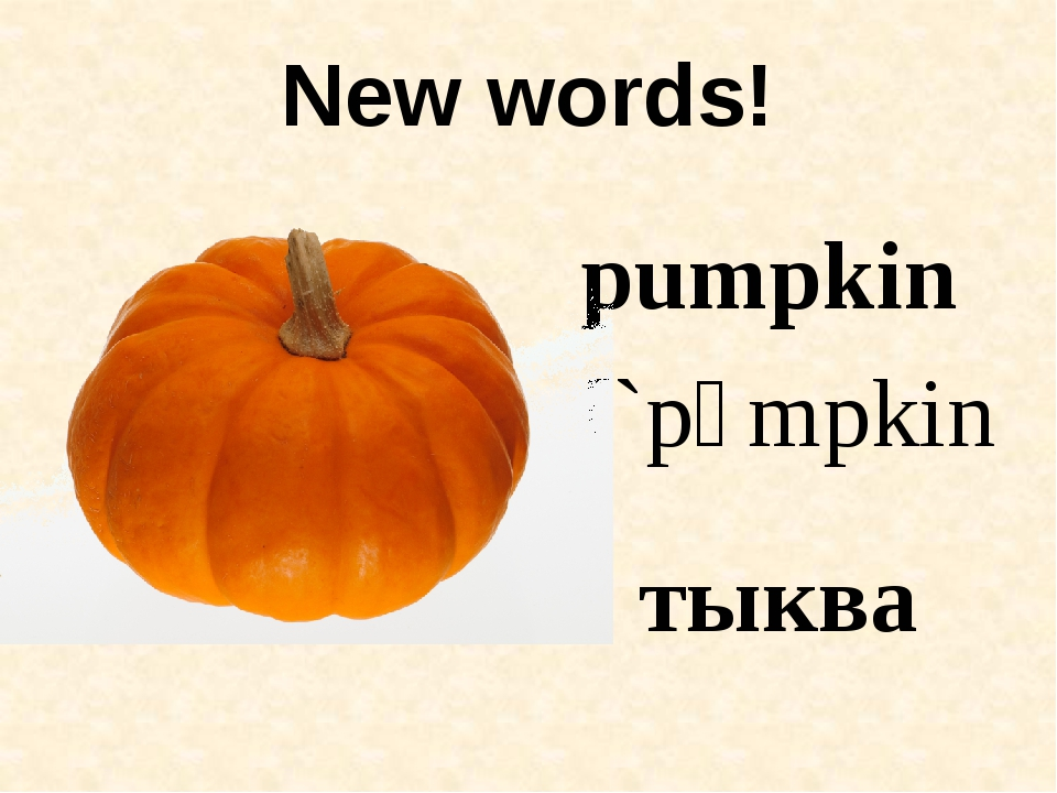 New words! pumpkin [`pʌmpkin] тыква