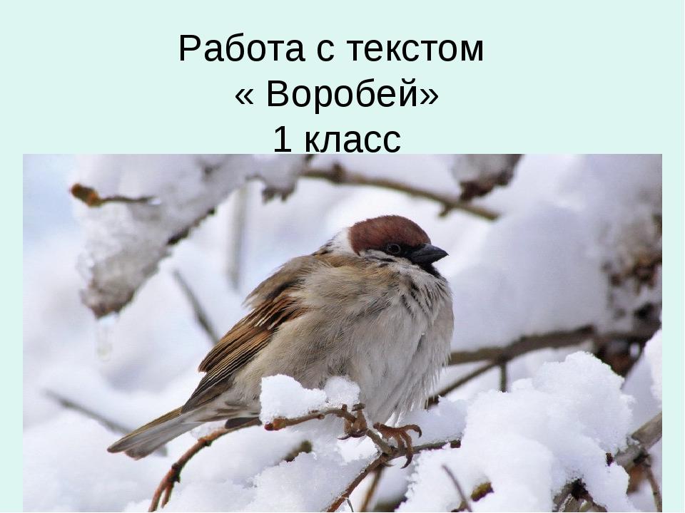Работа с текстом « Воробей» 1 класс