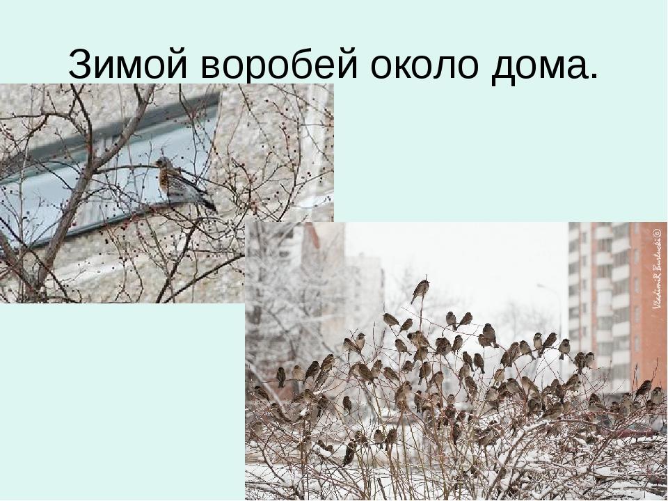 Зимой воробей около дома.