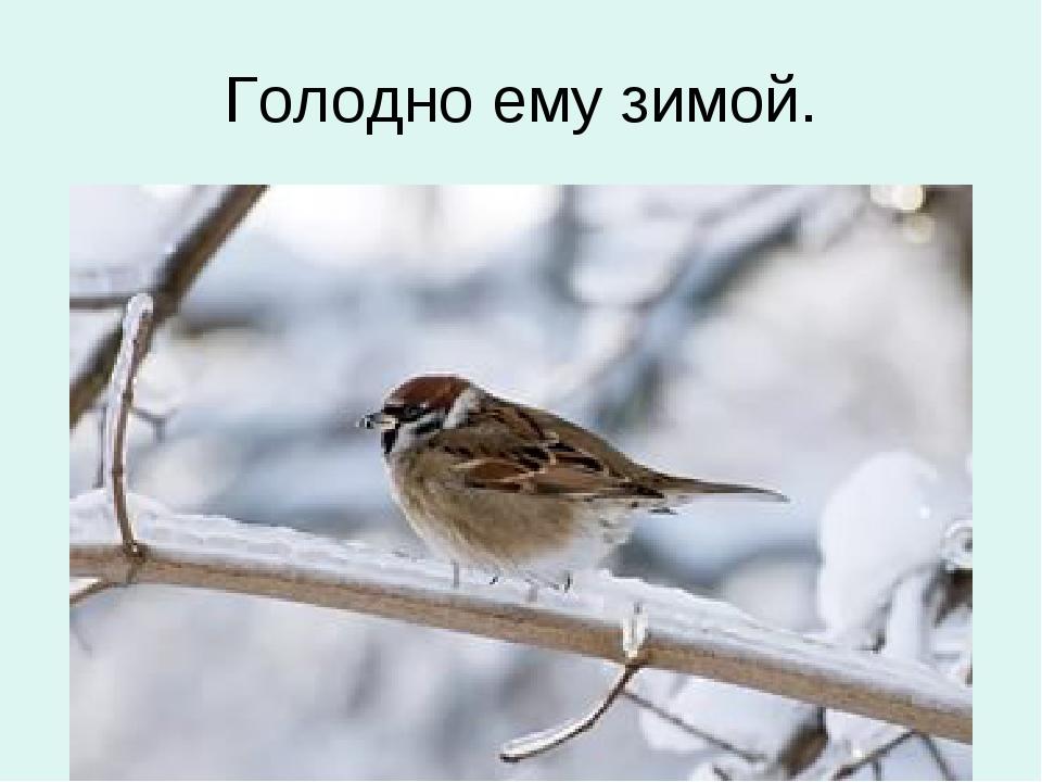 Голодно ему зимой.