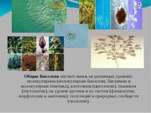 Общая биология изучает жизнь на различных уровнях: молекулярном (молекулярная