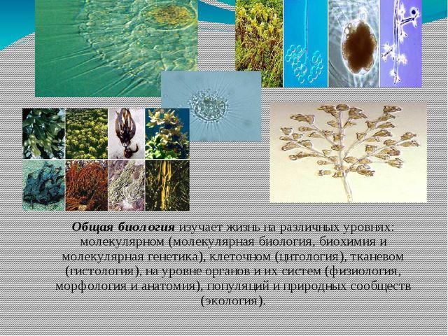 Общая биология изучает жизнь на различных уровнях: молекулярном (молекулярная...