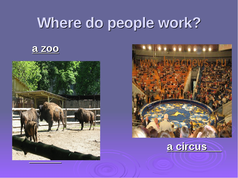 Where do people work? a zoo a circus