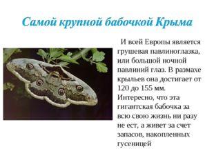И всей Европы является грушевая павлиноглазка, или большой ночной павлиний г