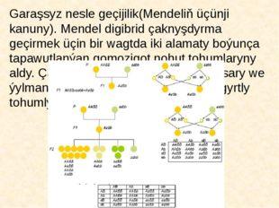Garaşsyz nesle geçijilik(Mendeliň üçünji kanuny). Mendel digibrid çaknyşdyrma