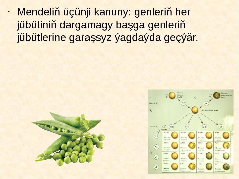Mendeliň üçünji kanuny: genleriň her jübütiniň dargamagy başga genleriň jübüt...
