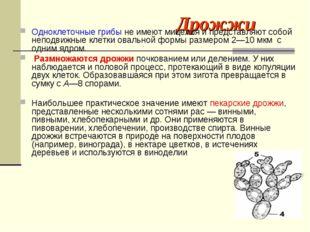 Дрожжи Одноклеточные грибы не имеют мицелия и представляют собой неподвижные