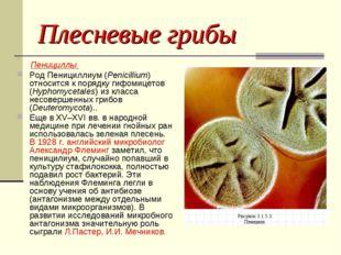 Плесневые грибы Пенициллы Род Пенициллиум (Penicillium) относится к порядку г
