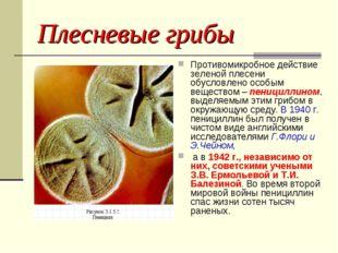 Плесневые грибы Противомикробное действие зеленой плесени обусловлено особым