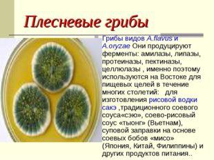 Плесневые грибы Грибы видов A.flavus и A.oryzae Они продуцируют ферменты: ами