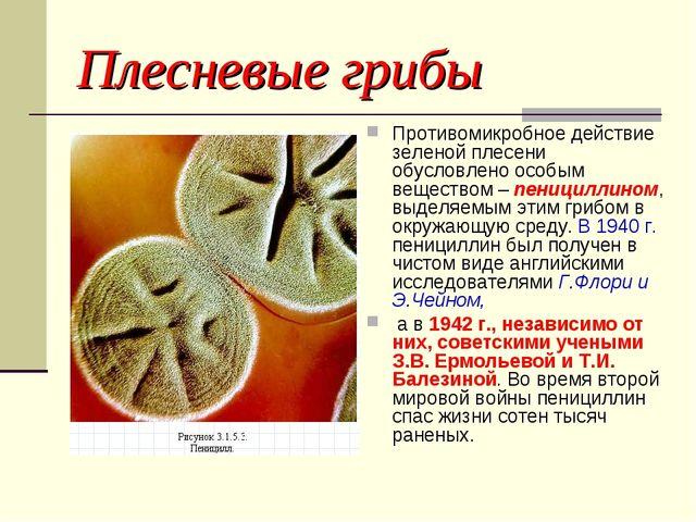 Плесневые грибы Противомикробное действие зеленой плесени обусловлено особым...
