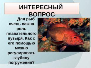 ИНТЕРЕСНЫЙ ВОПРОС Для рыб очень важна роль плавательного пузыря. Как с его по