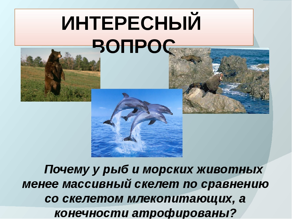 ИНТЕРЕСНЫЙ ВОПРОС Почему у рыб и морских животных менее массивный скелет по с...