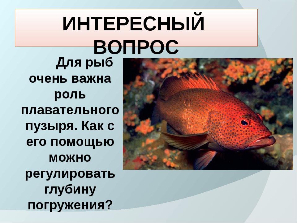 ИНТЕРЕСНЫЙ ВОПРОС Для рыб очень важна роль плавательного пузыря. Как с его по...