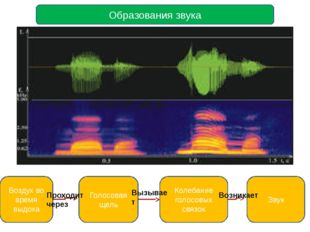 Образования звука Воздух во время выдоха Голосовая щель Колебание голосовых