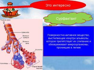 Это интересно Сурфактант Поверхностно-активное вещество, выстилающее изнутри
