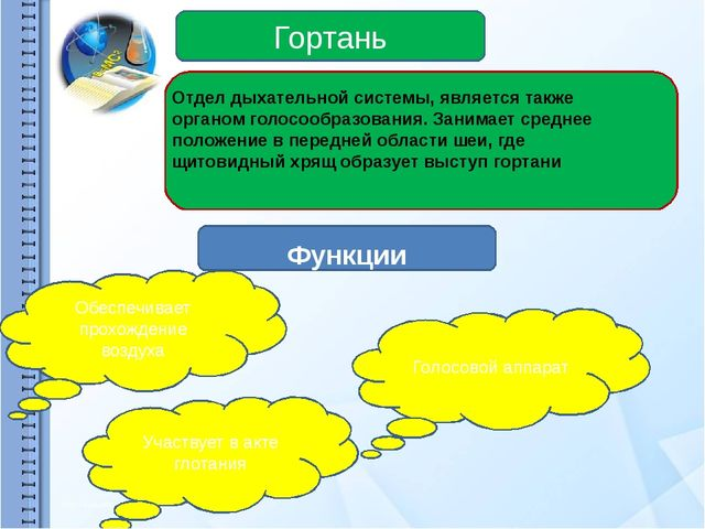 Гортань Функции Обеспечивает прохождение воздуха Голосовой аппарат Участвует...