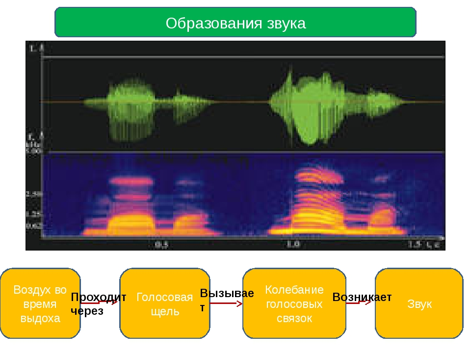 Образования звука Воздух во время выдоха Голосовая щель Колебание голосовых...
