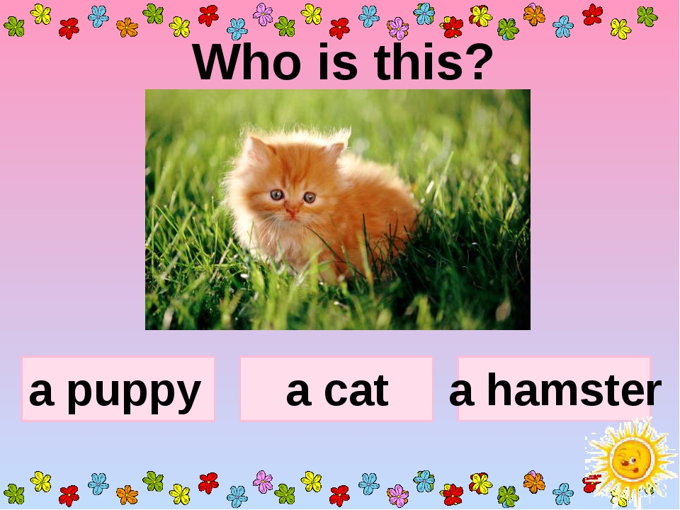 Who is this? a puppy a hamster a cat