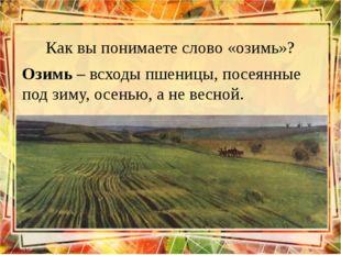 Как вы понимаете слово «озимь»? Озимь – всходы пшеницы, посеянные под зиму, о