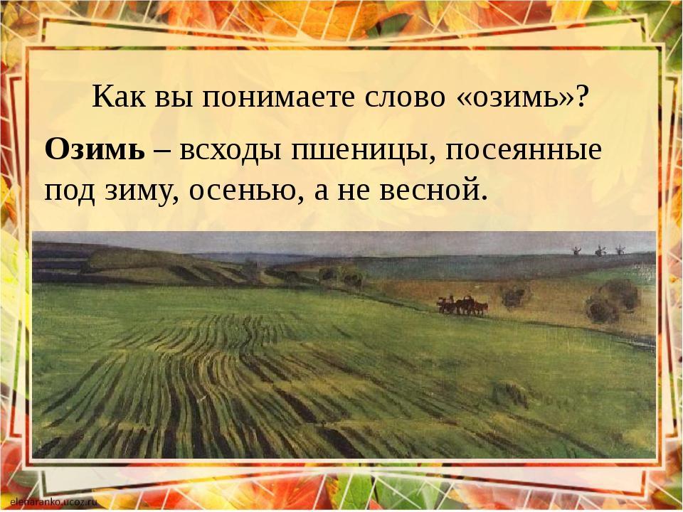 Как вы понимаете слово «озимь»? Озимь – всходы пшеницы, посеянные под зиму, о...