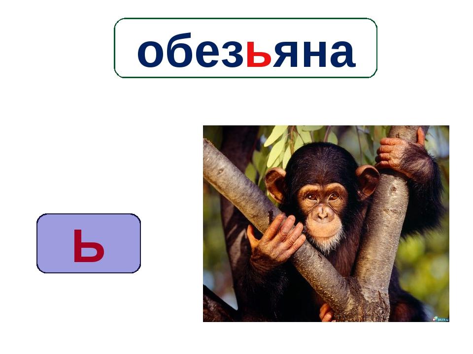 Ь обезьяна