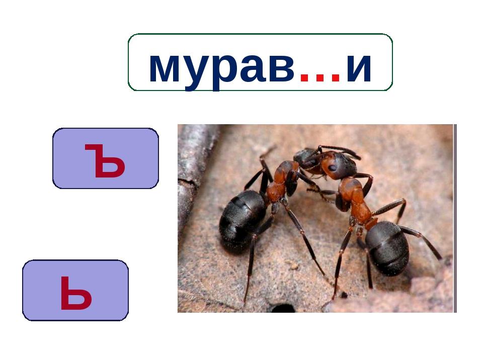 Ь Ъ мурав…и