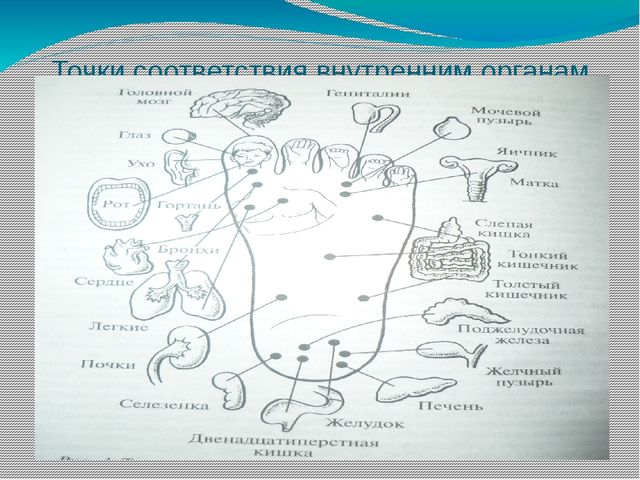 Точки соответствия внутренним органам на стопе