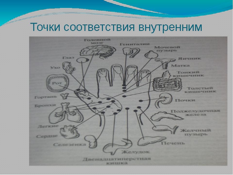 Точки соответствия внутренним органам на кисти