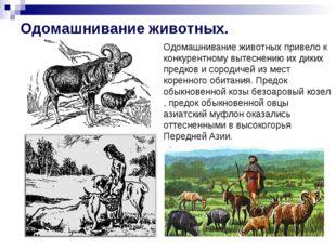 Одомашнивание животных. Одомашнивание животных привело к конкурентному вытесн