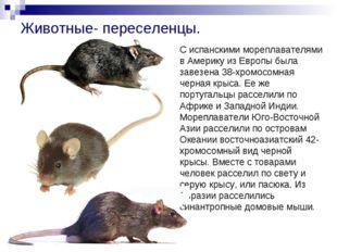 Животные- переселенцы. С испанскими мореплавателями в Америку из Европы была