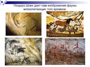 Пещера Шове дает нам изображения фауны млекопитающих того времени.
