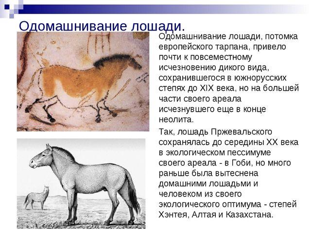 Одомашнивание лошади. Одомашнивание лошади, потомка европейского тарпана, при...