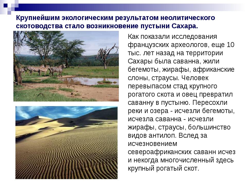 Крупнейшим экологическим результатом неолитического скотоводства стало возник...