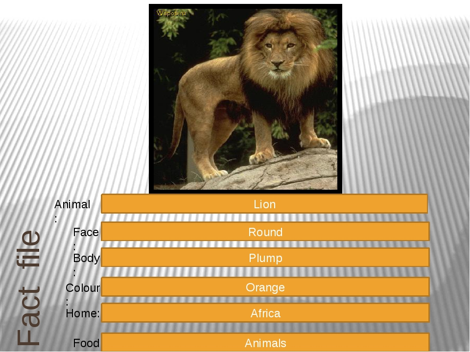 Fact file Round Plump Orange Africa Animals Face: Body: Colour: Home: Food: L...