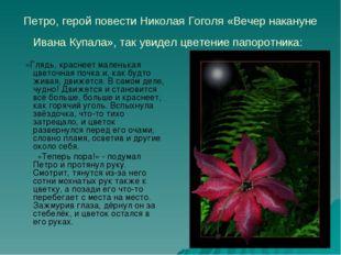 Петро, герой повести Николая Гоголя «Вечер накануне Ивана Купала», так увидел