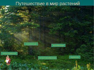Путешествие в мир растений водоросли мохообразные папоротникообразные голосем
