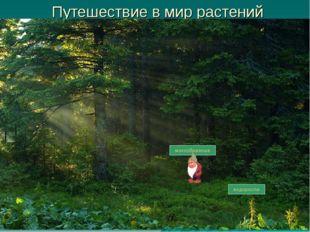 Путешествие в мир растений водоросли мохообразные