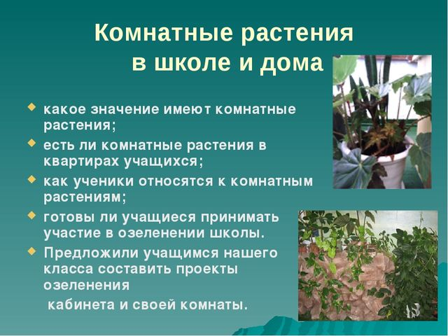 Комнатные растения в школе и дома какое значение имеют комнатные растения; ес...