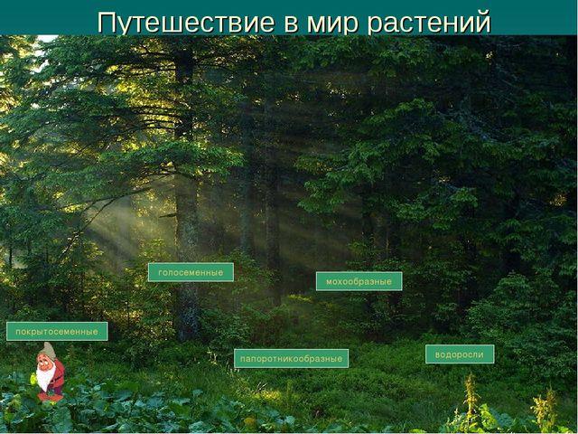 Путешествие в мир растений водоросли мохообразные папоротникообразные голосем...