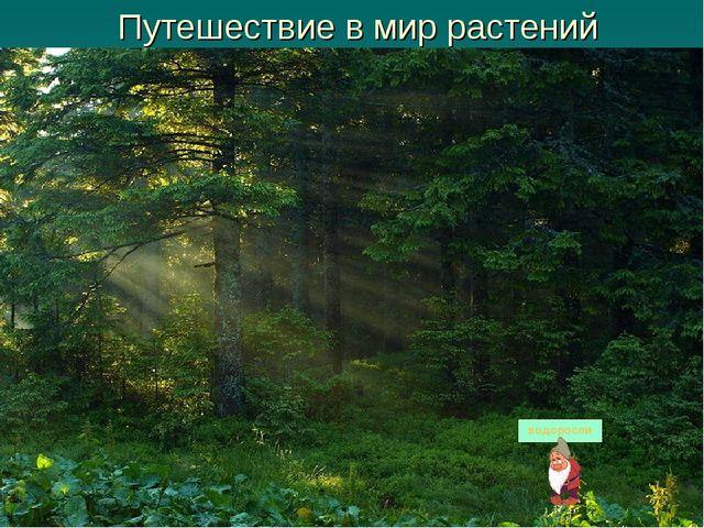 Путешествие в мир растений водоросли