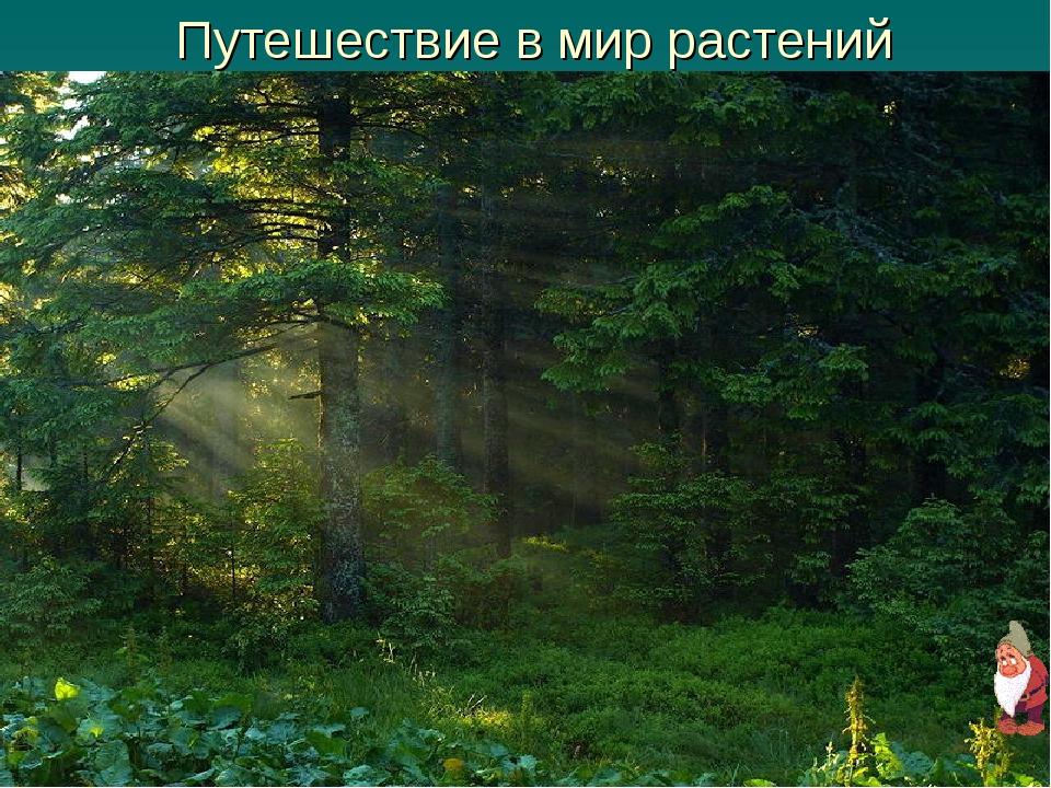 Путешествие в мир растений