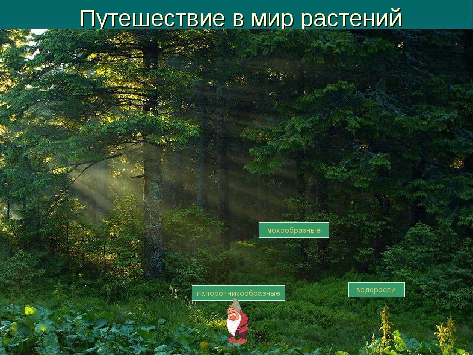 Путешествие в мир растений водоросли мохообразные папоротникообразные